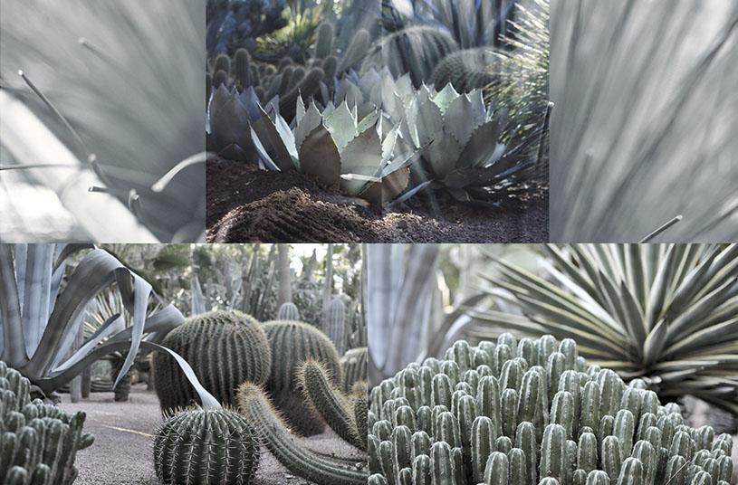 majorelle-garden-credit-marion-giorgi-marrakech-1