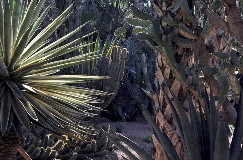 majorelle-garden-credit-marion-giorgi-marrakech-3