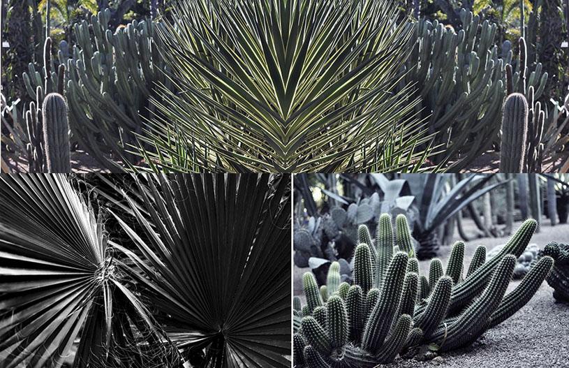majorelle-garden-credit-marion-giorgi-marrakech-5