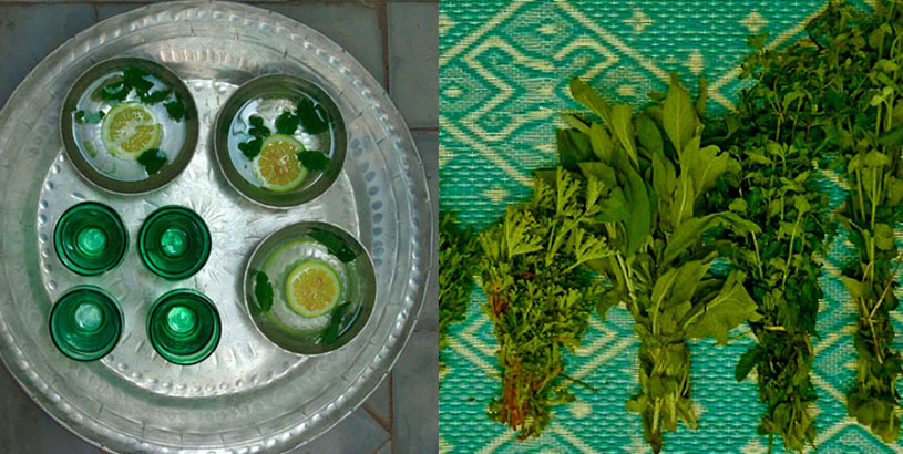 green-tea-mint-fresh-herbs