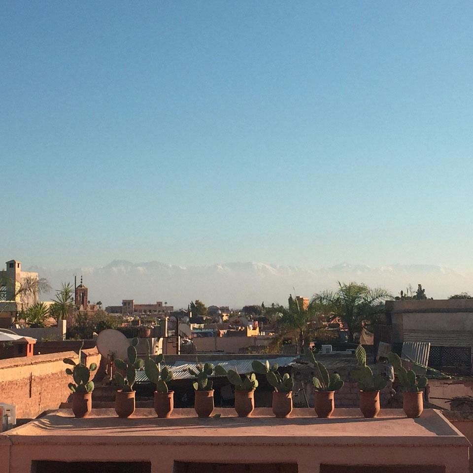 riad-darkawa-winter-cactus-terrasse-medina-marrakech-2