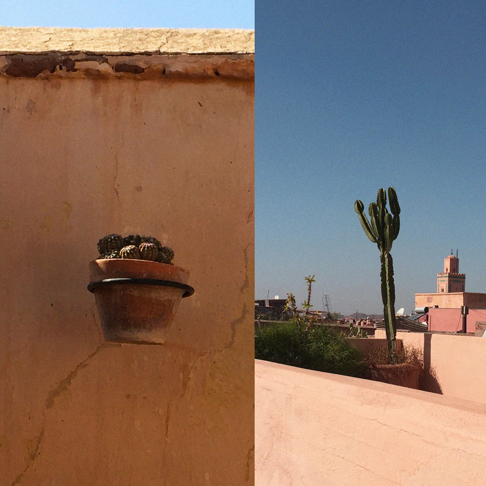 riad-darkawa-winter-cactus-terrasse-medina-marrakech-4