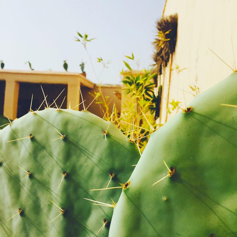 riad-darkawa-winter-cactus-terrasse-medina-marrakech-6