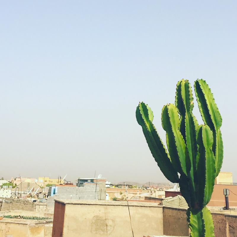 riad-darkawa-winter-cactus-terrasse-medina-marrakech-7