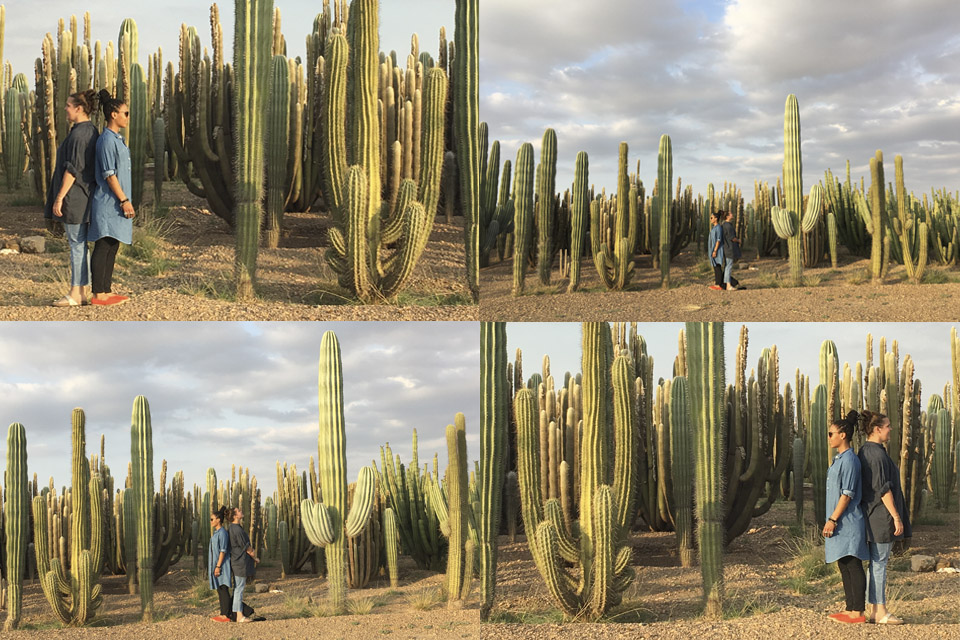 cactus grove plantation-passion-marrakech-00