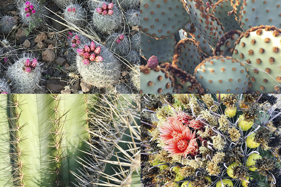 cactus grove plantation-passion-marrakech-00