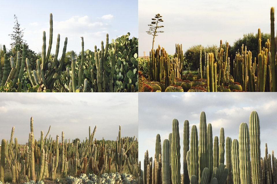 cactus-plantation-passion-marrakech-03