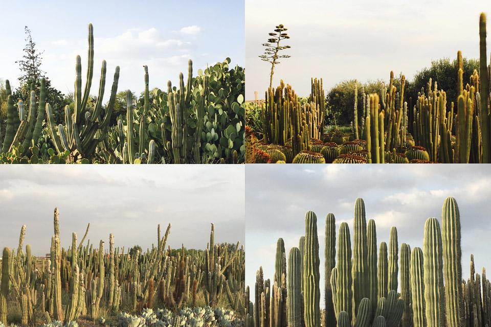 cactus-plantation-passion-marrakech-03