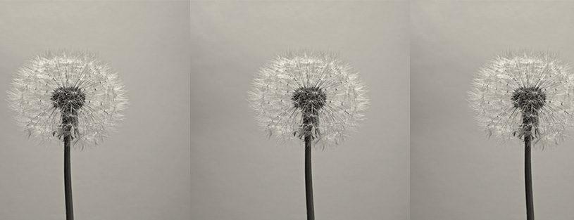 flowers by anita calero