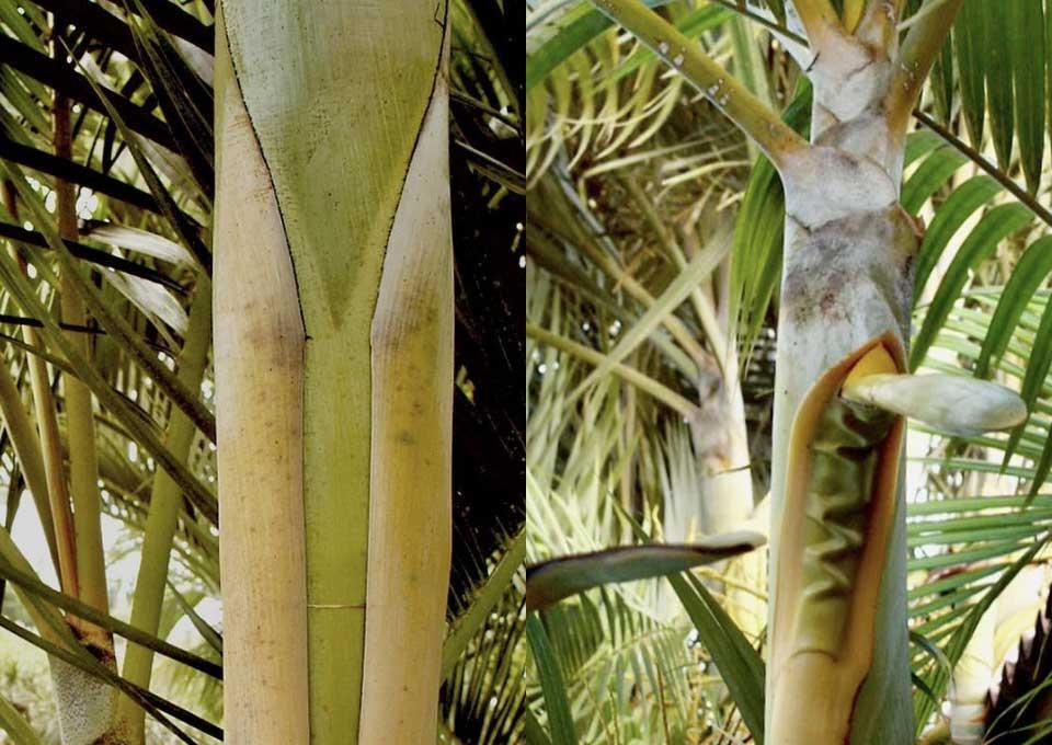 palms details